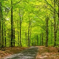 Skogen I